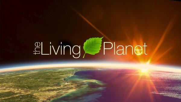 Видео: как климат изменил Землю за20 лет