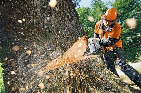 В США собирают базу ДНК дляборьбы снезаконной вырубкой деревьев