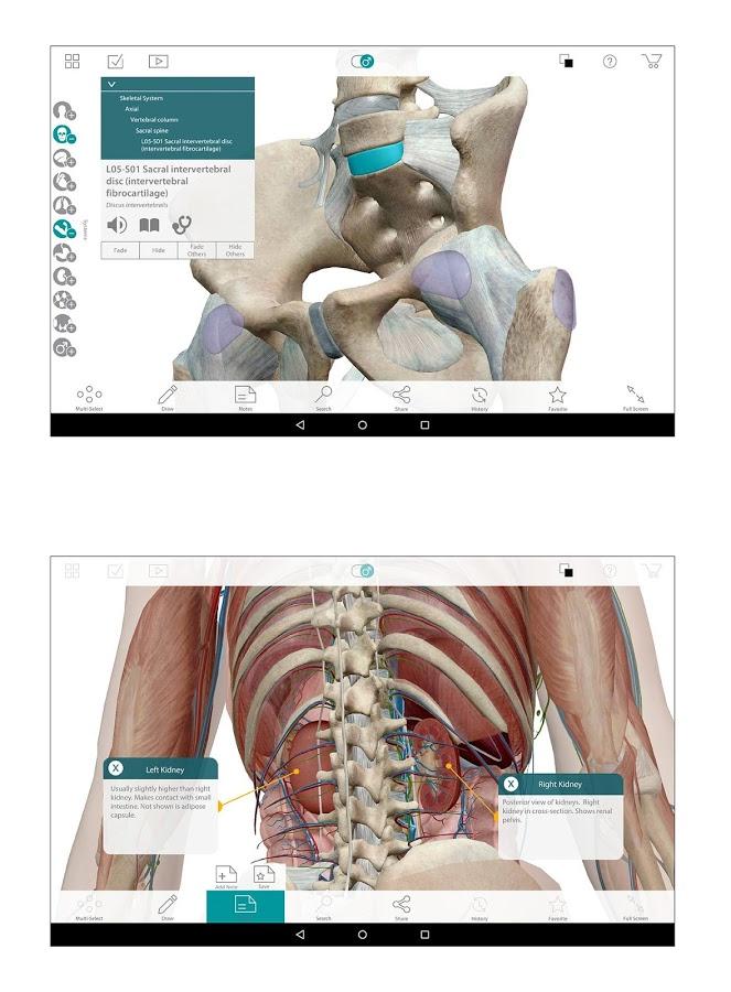 Скачать Human Anatomy Atlas 7 4 03 для Android