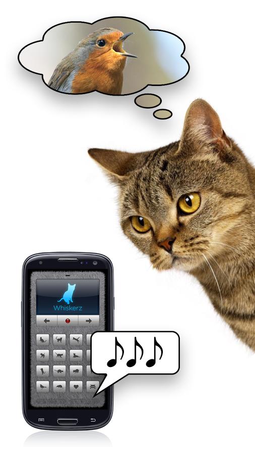 кошачий звуки скачать