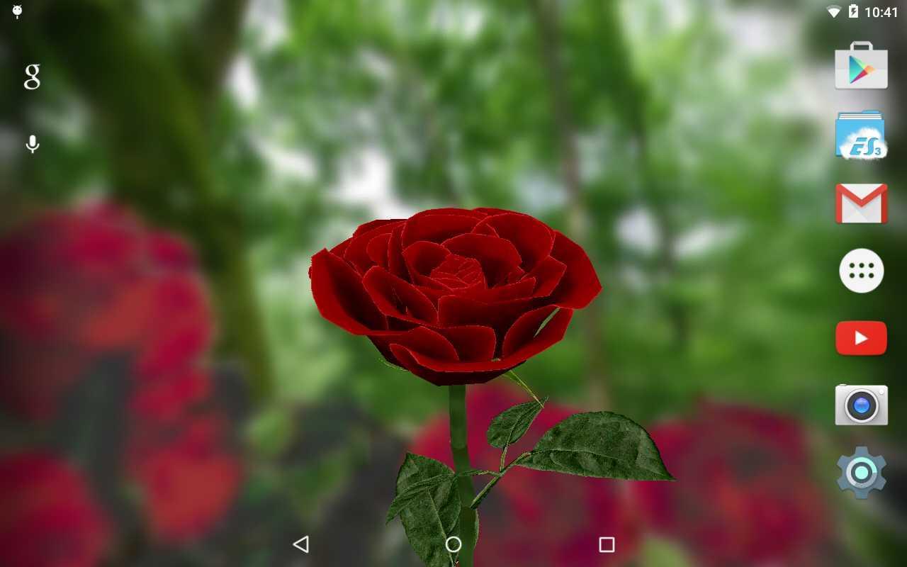 Живые обои скачать бесплатно розы