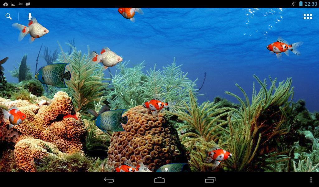 Живые Обои Рыбки Андроид