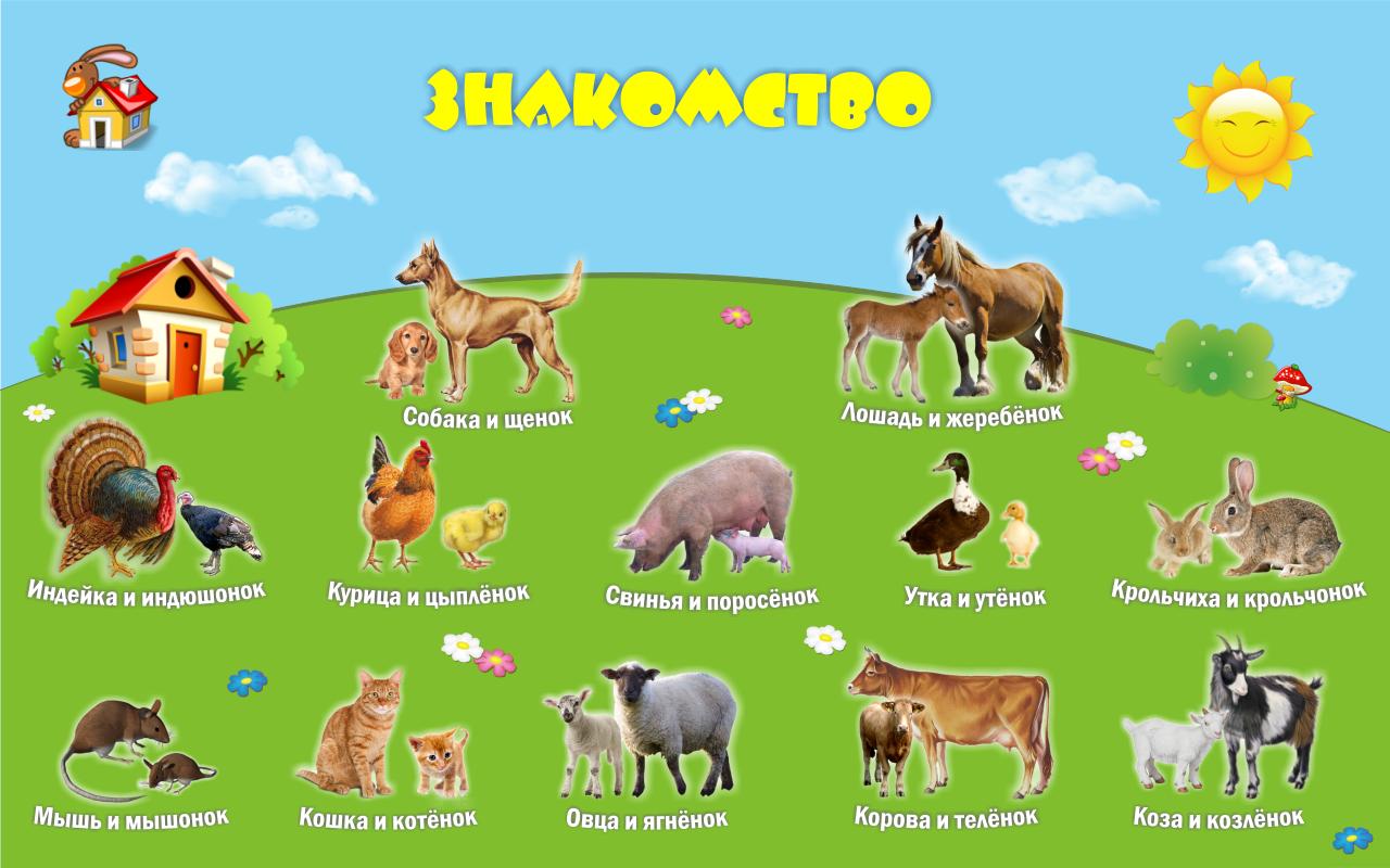 Картинки по запросу животные детям