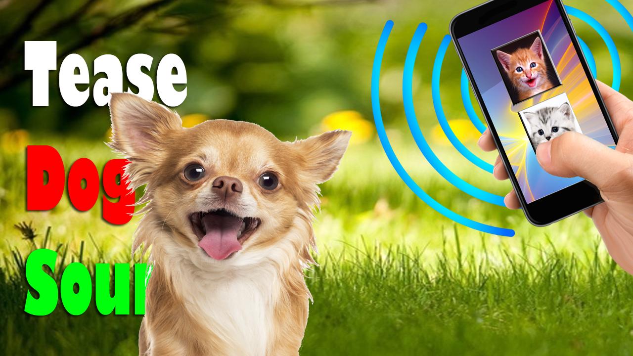 Скачать звуки животных собаки