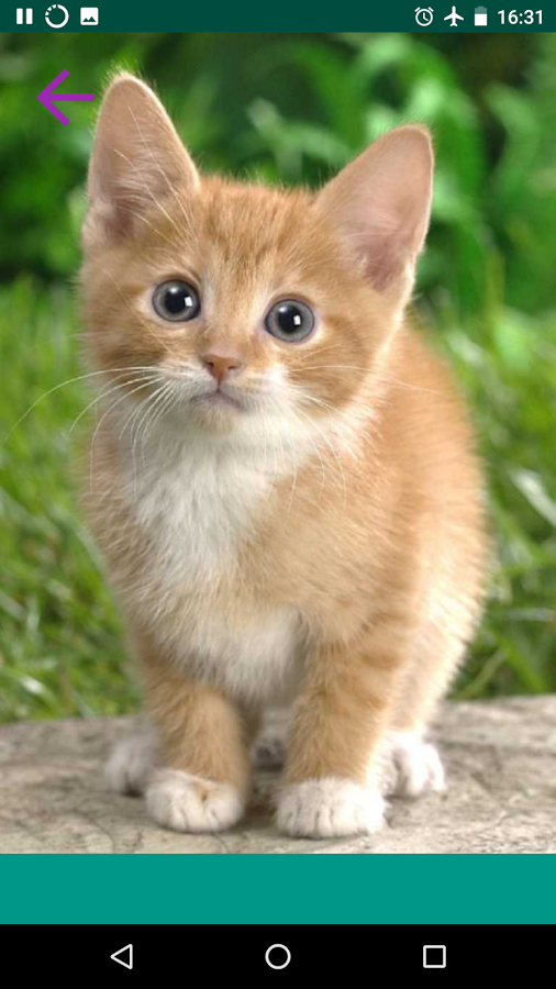Звуки животных кошки скачать бесплатно