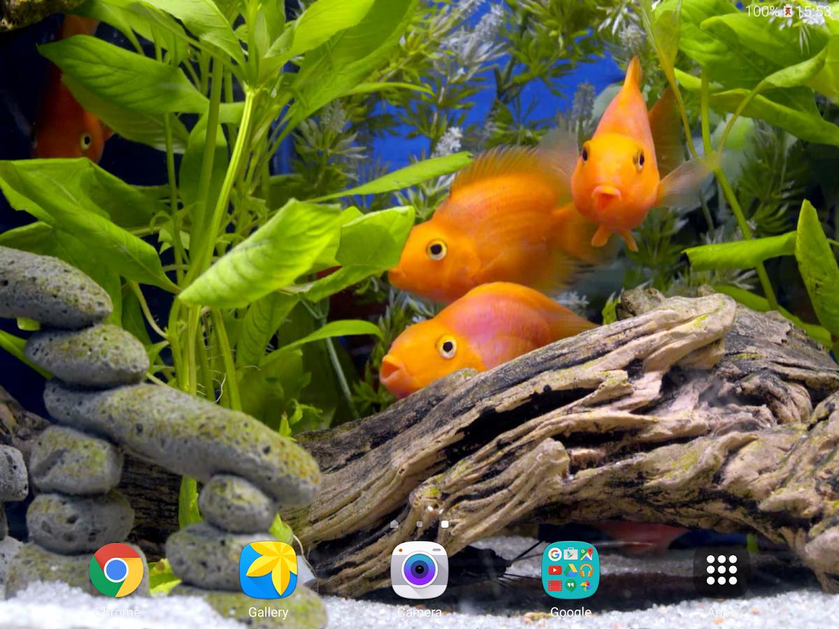 Звуки аквариума скачать
