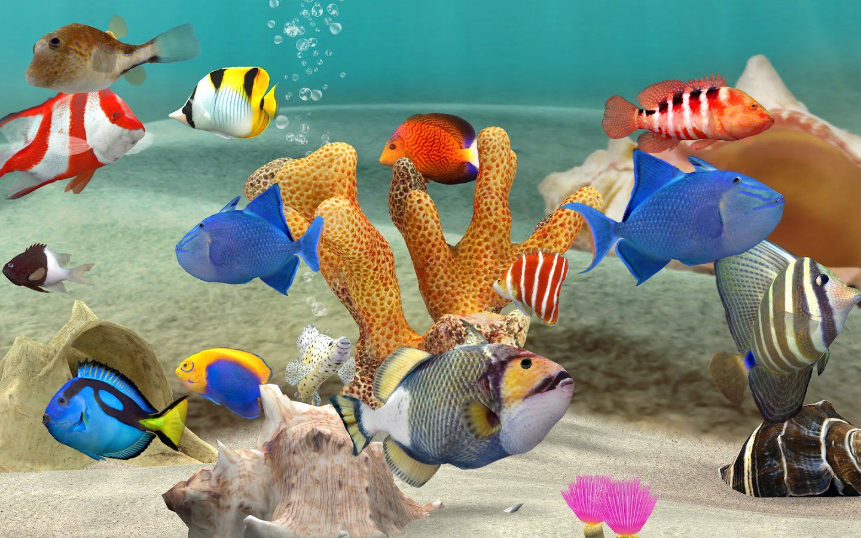 Fish farm 3 3d aquarium simulator 1 for Fish farm 3